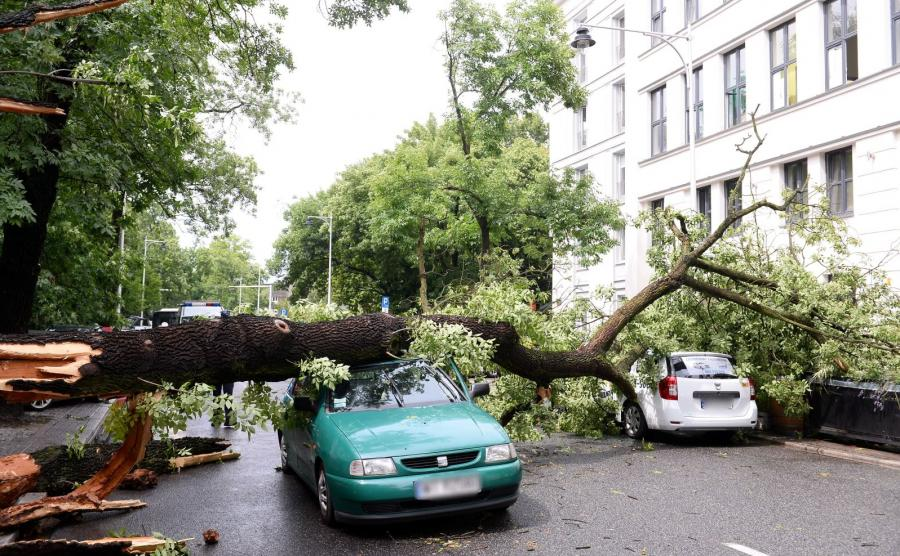 Widok po nawałnicy. Powalone drzewo na ulicy Rozbrat w Warszawie