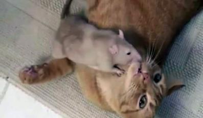 Żyją jak szczur z kotem