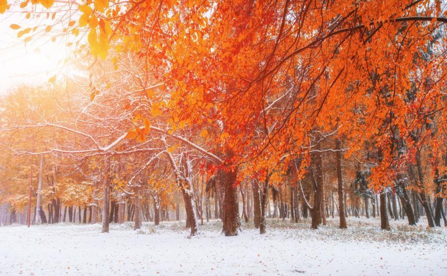 Wczesna zima