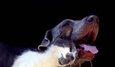 Posłowie chcą kastrować psy i koty