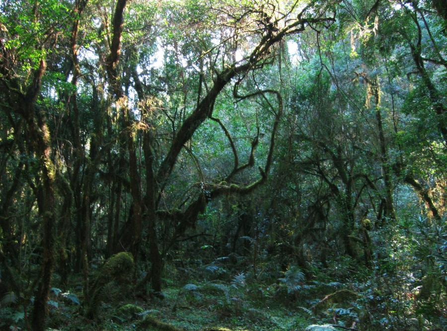 Lasy Afryki chłoną coraz więcej CO2