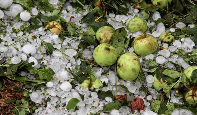 W Bukowinie Tatrzańskiej gwałtowna burza z gradem wyrządziła szkody głównie niszcząc samochody, drzewa owocowe i dachy pokryte eternitem