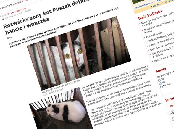 Zobacz kota, który zaatakował opiekunów