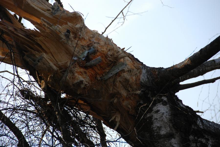 Zdjęcia wykonane tuż po katastrofie smoleńskiej