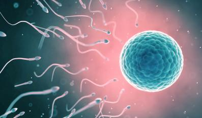 Komórka jajowa i plemniki