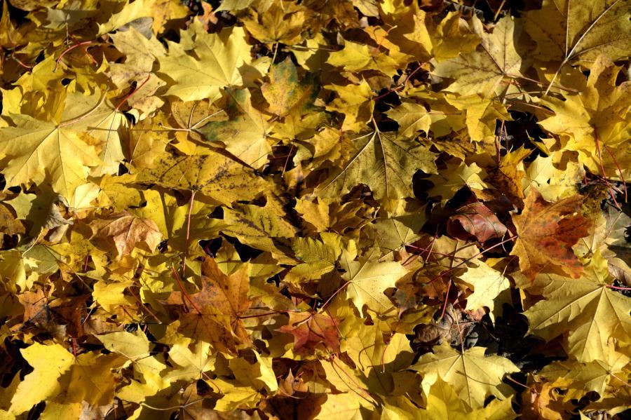 Pogodna jesień