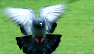 Tak kochał ptaki, że sklejał im skrzydła