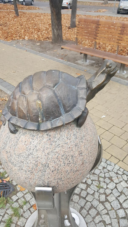 Żółw  (Zdjęcie robione Samsung Galaxy S6 Edge+)