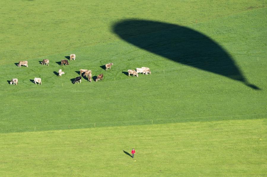 Krowy na łące w Szwajcarii widziane z balonu