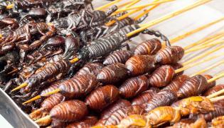 Grillowane owady